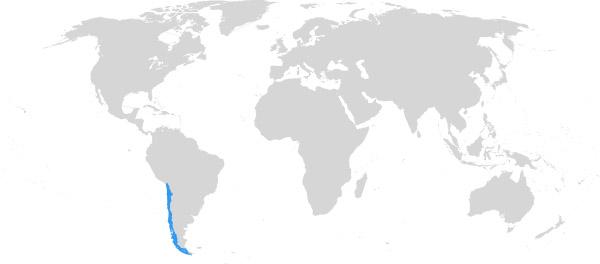 Nationalfeiertag Chile Calenga